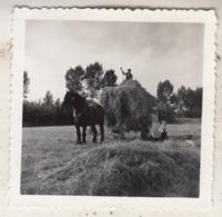 Grimbergen - Foto 6 X 6 Cm - Lieux