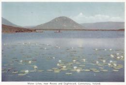 Postcard Water Lilies Near Recess And Oughterard Connemara Ireland My Ref  B23846 - Galway