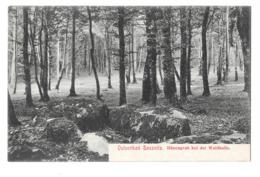 Ostseebad Sassnitz Hunengrab Bei Der Waldhalle Karte Nicht Im Umlauf - Carte Non Circulée - Sassnitz