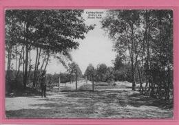 KALMTHOUT:  DREVE AU MONT NOIR-HOELEN - Kalmthout