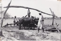 Kenia - Trasporto Con Animali - Anni 50 - Africa