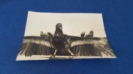 VINTAGE PRESS PHOTO ANIMALS EAGLE - VULTURE WITH COMMON BIRDS LONDON ENGLAND - Photos