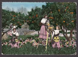 94511/ COTE D'AZUR, Groupe De Jeunes Filles En Costume Folklorique Cueillant Des Oranges - Vestuarios