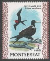 Montserrat. 1970 Birds. 3c MNH. SG 244 - Montserrat
