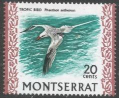Montserrat. 1970 Birds. 20c MNH. SG 249 - Montserrat