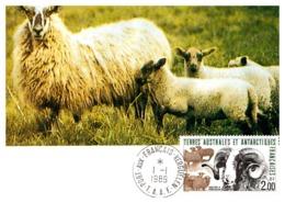 Thème Animaux - Mouton - T.A.A.F Carte Maximum - Farm