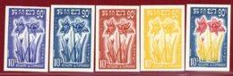 Cambodia 1961 #93, Color Proof X5, Amaryllis, Flower, Plant - Cambodja