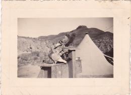 7ém R. T. A. : Camp De Gabis, Avec Pigeons Messagers - Photo : RIGAUD Constantine -  1938 - Format 6,2cm X 8,,5cm - War, Military