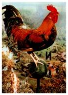 Thème Animaux - Oiseaux - Coq - France Carte - Farm