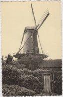 TURNHOUT (Antw.) - Molen/moulin -  De Oude Goormolen ( Osthovensteenweg) - Antwerpen