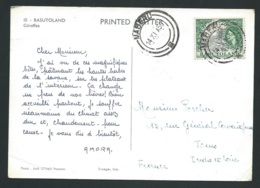 "Cpm ""Basutoland Giraffe "" Affranchie En 1956 - Raa 3616 - 1933-1964 Crown Colony"