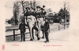 PARIS ( 75 )  - Jardin D'Acclimatation - L'Éléphant . - Parchi, Giardini