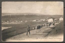 Carte P De 1907 ( Vallée De Joux / Passage D'un Troupeau ) - VD Vaud