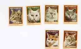 Mozambique 1979-chats-YT 677/82***mnh- - Hauskatzen