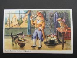 """Chats Habillés Illustrant Comptine """"Cadet Roussel A Trois Chapeaux"""" - Katten"""