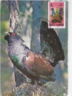 MAXIMUM CARD - MAXICARD - MAXIMUM KARTE - CARTE MAXIMUM - ROMANIE - OISEAUX - GRAND TETRAZ - Tetraourugallus - Altri