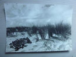 COTE ATLANTIQUE - Soir D'orage Sur La Dune - Non Classés