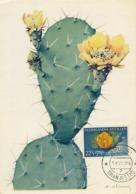 D38434 CARTE MAXIMUM CARD 1955 NETHERLANDS ANTILLES - CACTUS OPUNTIA CP ORIGINAL - Sukkulenten