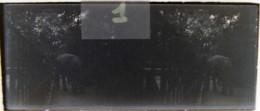 LEIPZIG, 1900 :  Zoo, Elefant. Eléphant. Plaque Verre Stéréoscopique Négatif - Plaques De Verre