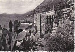 LA SPEZIA - Riomaggiore - Via Dell'Amore Vista Da S.Giacomo - 1955 - La Spezia