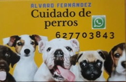 TARJETA DE CUIDADO DE PERROS DOGS. - Tarjetas De Visita