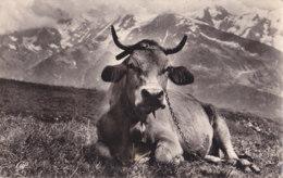 Savoie (73) - Une Belle Tarine à L'Alpage - France