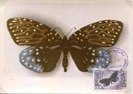 48354 Liban,maximum  1967  Butterfly,schmetterlinge,papillon, Erasmia  Sanguiflua - Schmetterlinge