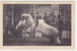 Eisbären-Dompteur Richard Rössler       (191016) - Zirkus