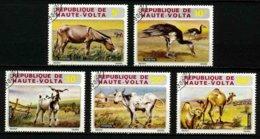 HAUTE VOLTA - ANIMAUX DE LA FERME - YT 279 à 283 - SERIE COMPLETE 5 TIMBRES OBLITERES - Farm