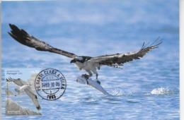 CARTE MAXIMUM - MAXICARD - MAXIMUM KARTE - MAXIMUM CARD - PORTUGAL - OISEAUX - BALBUZARD PÊCHEUR - Pandion Haliaetus - Águilas & Aves De Presa