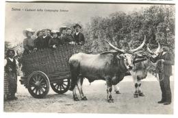 Siena Costumi Della Campagna Senese FAMIGLIA Di 8 VIAGGIANDO In Un Barroccio Tirato Da Bue C. 1908 - Siena