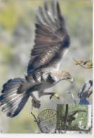CARTE MAXIMUM - MAXICARD - MAXIMUM KARTE - MAXIMUM CARD - PORTUGAL - OISEAUX - RUDD EAGLE - Haliaeetus Albicilla - Águilas & Aves De Presa