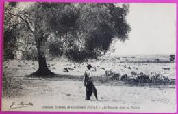 Cpa Aleria Domaine National De Casabianda Moutons Dans La Prairie Berger Carte Postale Haute Corse Edition Moretti Rare - Autres Communes