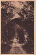 30 Environs D'Anduze, Prafrance, Allée Des Bambous - Anduze