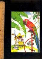 Guyane : Illustration Felix Lorioux Dessin Peinture Perroquet Parrot Musicien - Cayenne