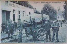 Assche Vervoer Der Hop Naar De Merkt Attelage De Chiens Asse (Reproduction - Photo) - Asse