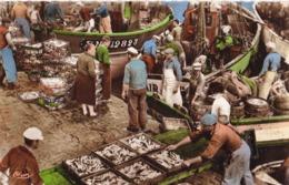 LA TURBALLE - Débarquement Des Sardines - La Turballe