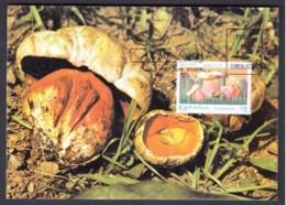 23.- SPAIN ESPAGNE 1994 MAXIMUM CARD. MUSHROOMS CHAMPIGNON SETAS FUNGI Boletus Satanas - Hongos