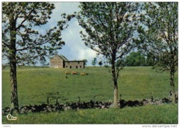Carte Postale  15. Saint-Urcize  La Ferme Trés Beau Plan - Non Classificati