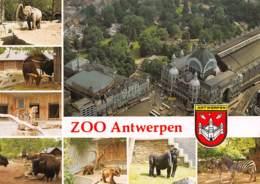 CPM - Zoo ANTWERPEN - Dierenpark - Planckendael - Antwerpen