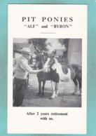 Small Post Card Of Horses,Pit Ponies,Alf And Byron,N80. - Chevaux