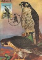 BUZIN / CARTE IRSNB / COB 2246 - 1985-.. Pájaros (Buzin)
