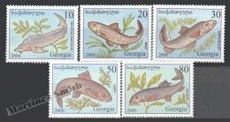Georgie - Georgia 2000 Yvert 262-266, Fauna. Piscis - MNH - Georgia