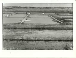 ( METIERS )( MARAIS SALANTS )( ILE DE RE )( 17 CHARENTES MARITIMES ) JUILLET 1984.PHOTO 18 X 24 - Métiers