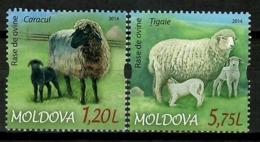 Moldova 2014 Moldavia / Sheep Mammals MNH Ovejas Mamiferos Säugetiere / Cu13637  29-16 - Sellos