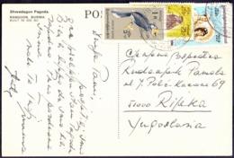 BURMA - BIRDS  EAGLE - COSTUMES - 1975 - Aquile & Rapaci Diurni