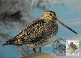 CARTE MAXIMUM - MAXICARD - MAXICARD - MAXIMUM CARD - BELGIQUE - OISEAUX - BECASSINE DES MARES - Gallinago Gallinago - Oiseaux