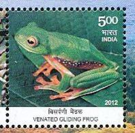 Inde. India. 2012 . Grenouille.  Malabar Gliding Frog - Grenouilles