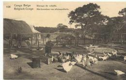 Congo Belge Elevage De Volaille  (2305) - Congo Belge - Autres
