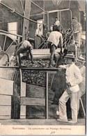 SURINAME - De Suikermolen Van Plantage Marienburg. - Surinam